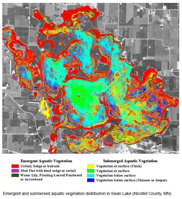Emergent and submersed aquatic vegetation distribution in Swan Lake (Nicollet County, MN).